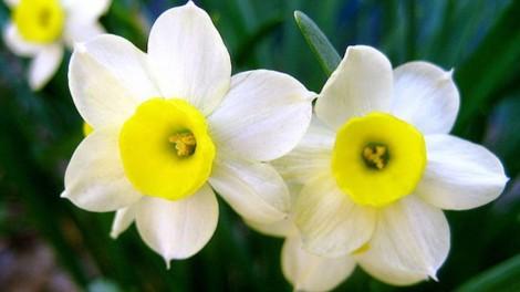 Το λουλούδι που αντιστοιχεί στο μήνα που γεννηθήκατε και τι συμβολίζει